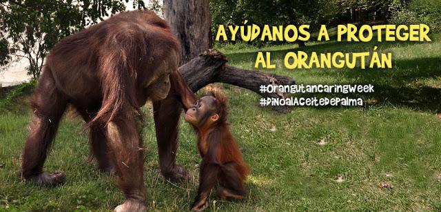 orangutan-zoo-madrid-aceite-de-palma1